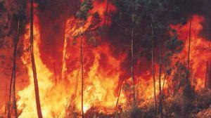 La urbanización y el cambio climático impulsan los incendios forestales del Sur de Europa