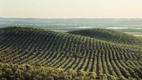 Las exportaciones de aceite de oliva crecen más de un 15% respecto a 2016