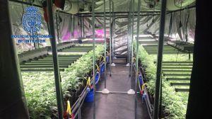 Desmantelado un cultivo hidropónico con más de 600 plantas de marihuana en Barcelona