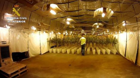 La Guardia Civil desarticula una organización criminal y desmantela un cultivo de 12.000 plantas de marihuana