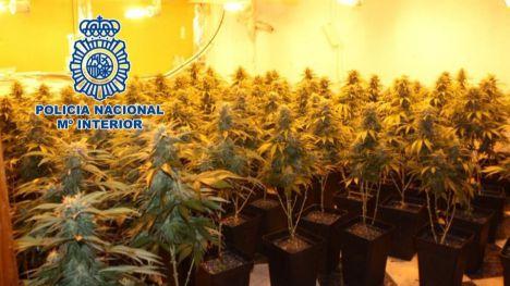 La Policía Nacional desmantela tres plantaciones indoor de marihuana en Málaga