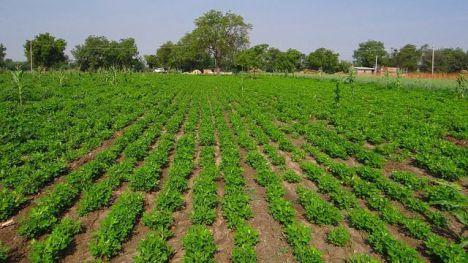 El Gobierno reduce el IRPF a los productores de cereales, leguminosas, patata, fruta de hueso, bovino de leche y ganadería extensiva