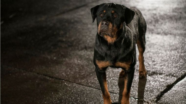 Superagente canino