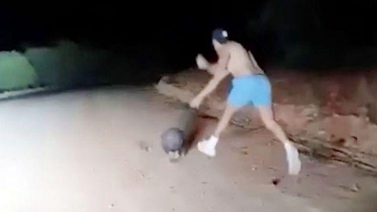 Un policía se graba matando a pedradas a un wombat