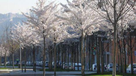 Más árboles en grandes ciudades evitarían cientos de muertes prematuras al año