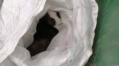 Rescatan a un perro en Fuenlabrada tras ser arrojado dentro de una bolsa a un contenedor