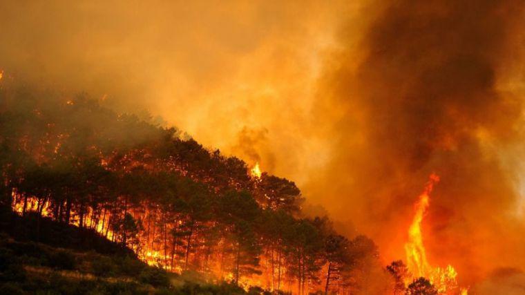 Alerta: un nuevo verano de incendios en varias regiones del planeta agudizará la emergencia climática