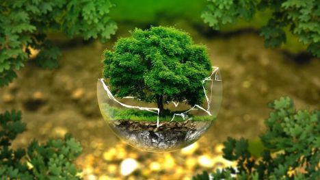Oganizaciones ecologistEcologistas en Acción Greenpeace SEO/BirdLife WWF as piden a la Comisión de Reconstrucción compromisos reales con la transición ecológica