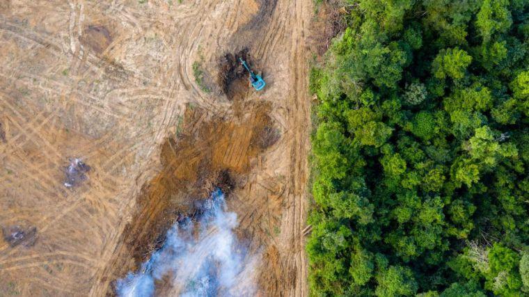 Más de 100 ONG unen fuerzas para evitar la deforestación importada en la UE