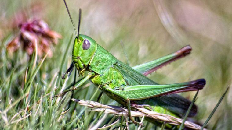 Ecologistas en Acción y la Asociación Española de Entomología presentan la campaña 'Sin insectos no hay vida'