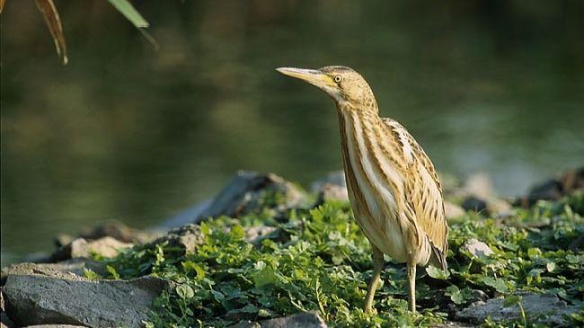 Joyas ornitológicas en peligro de extinción 'olvidadas a su suerte'