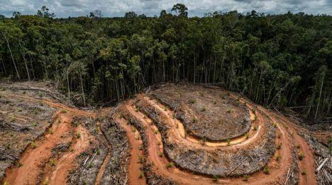 Un millón de personas piden en la campaña 'No te comas el bosque' una ley europea contra la deforestación