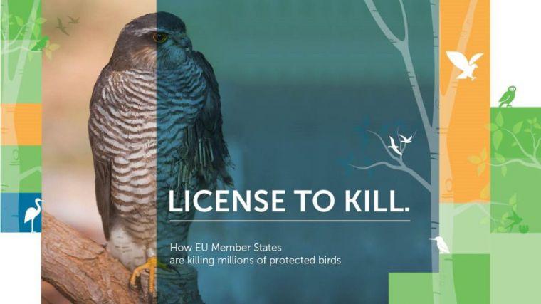 Los Estados Miembros de la UE son responsables de la muerte de más de 14 millones de aves