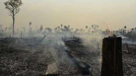 Parar la brutal deforestación de la Amazonia es fundamental para regular el sistema climático global