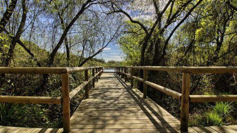 España está a punto de ser condenada por permitir la destrucción de Doñana