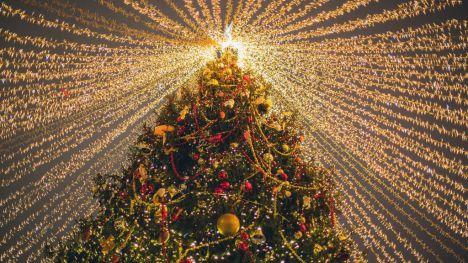 Luces navideñas y biodiversidad