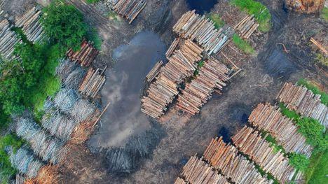 La deforestación sigue desenfrenada en los trópicos y subtrópicos