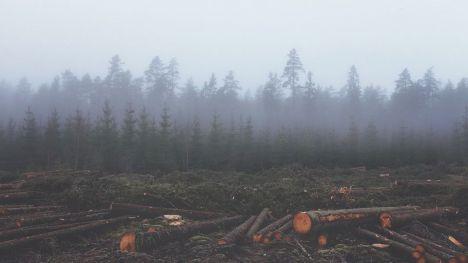 La deforestación de la Amazonia favorece la proliferación de bacterias resistentes a los antibióticos