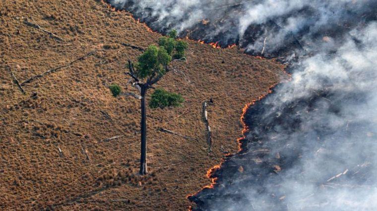 Junio deja el mayor número de alertas de fuego en la Amazonía desde 2007