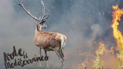 Incendios forestales: ¿Transformar el paisaje para que sea menos inflamable?