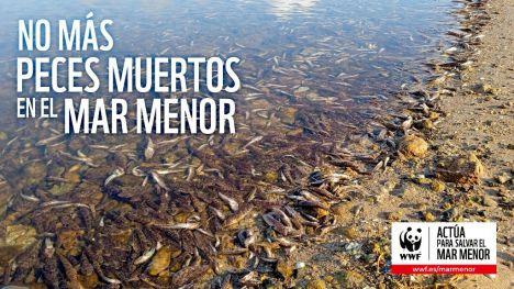 La fauna ha desaparecido de los fondos profundos del Mar Menor