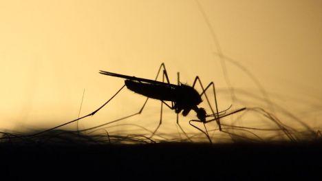 Las implicaciones del cambio climático en la expansión del Virus del Nilo Occidental por Europa