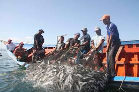 El calentamiento global acabará con un 20% de la pesca mundial