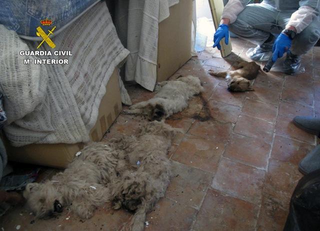 Investigado por abandono animal y tenencia ilícita de especies protegidas